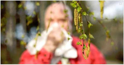 Heuschnupfen – Amoklauf des Immunsystems